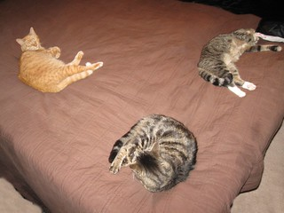 Three of my cats enjoying a warm waterbed on a cool afternoon.