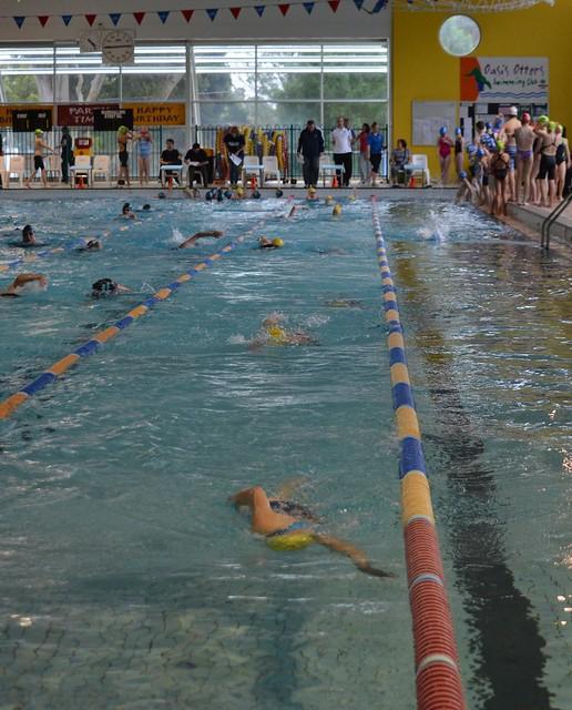 Cardinia Piranhas Swimming Club Photos