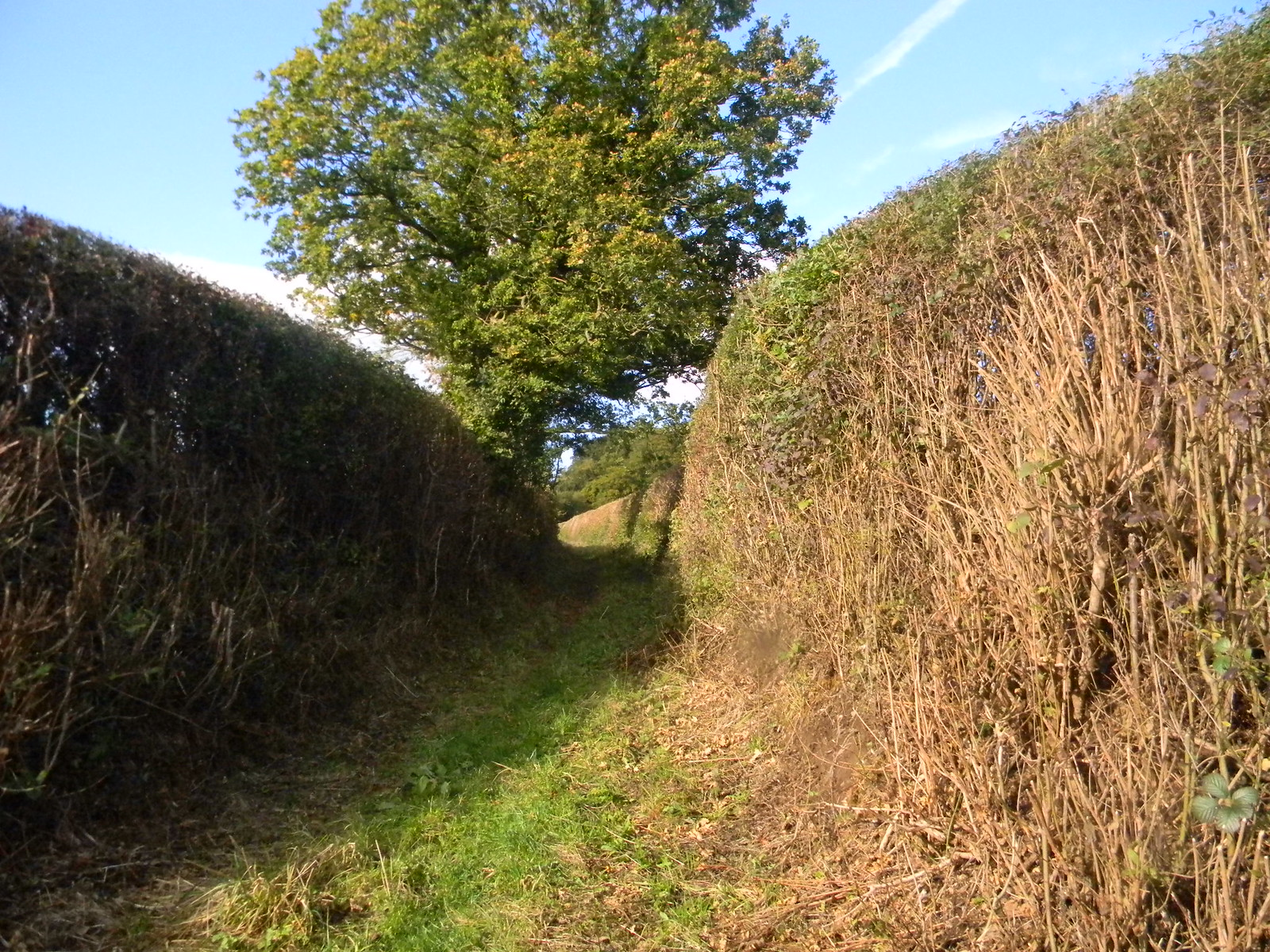 Hedged-in Bridleway Saunderton Circular via Wheelers End