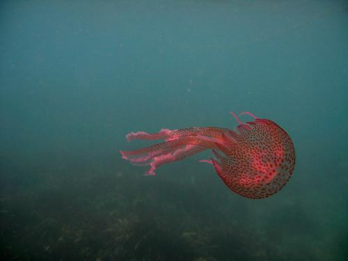 rojo y medusa, MIEDO
