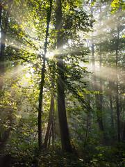 [フリー画像素材] 自然風景, 森林, 薄明光線, 風景 - ベルギー ID:201210162000