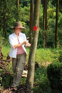 Sema Tags a Tree