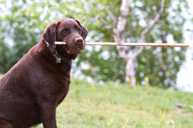 Toby stick
