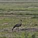 Etosha National Park impressions, Namibia - IMG_3275_CR2_v1