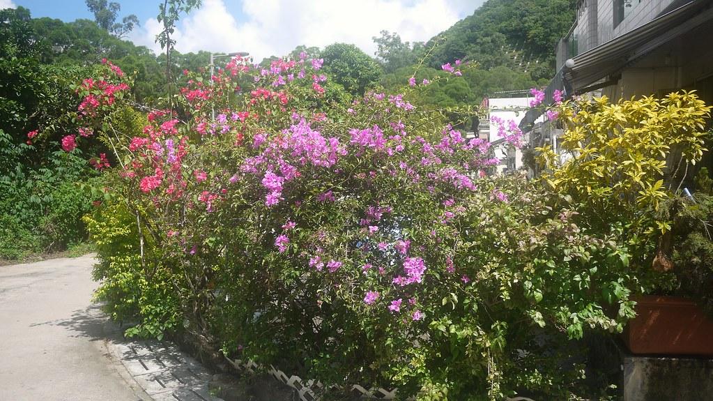 Colourful Sha Tin Tau Village