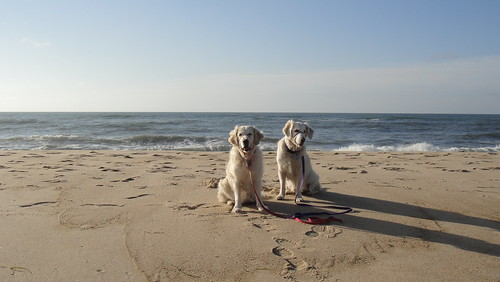 Frisket and Sailor at the Beach
