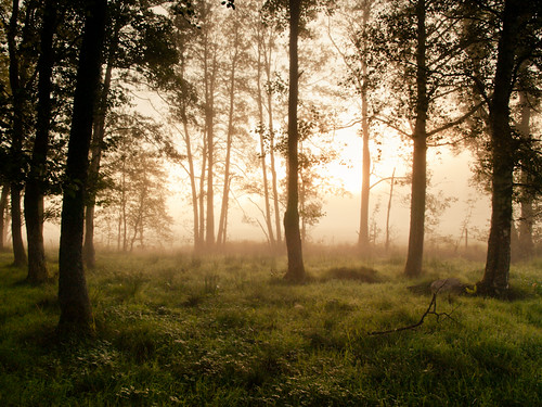 trees sunlight mist grass leaves misty fog forest sunrise landscape sweden foggy swedish fritsla