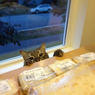 Gimme some cheese! #yoshi #cat #lol #dinner
