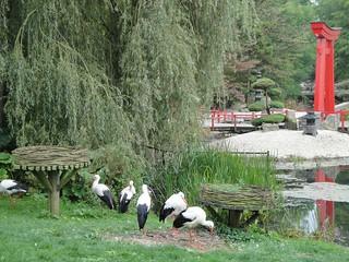 Jardín japonés en el Castillo de Arcen.