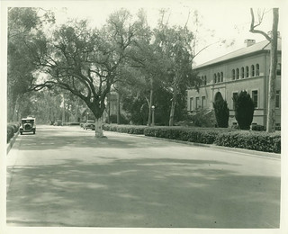 College Avenue in 1934 with a tree growing in the center of it
