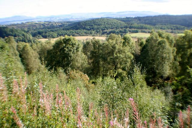 Achray Forest, Trossachs