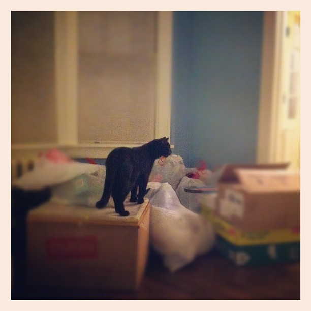 Stanley climbing on the massive pile of stuff we purged from the attic today.