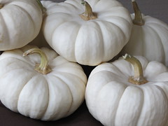 garlic(0.0), plant(0.0), vegetable(1.0), calabaza(1.0), produce(1.0), food(1.0), winter squash(1.0), cucurbita(1.0), gourd(1.0),