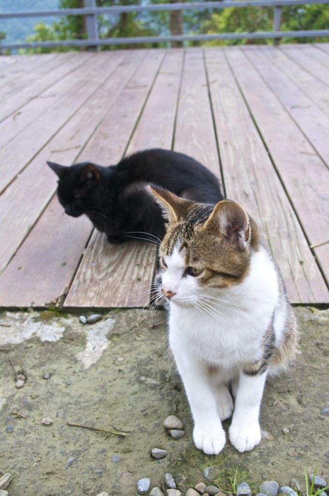 拉拉山上 貓咪一家人