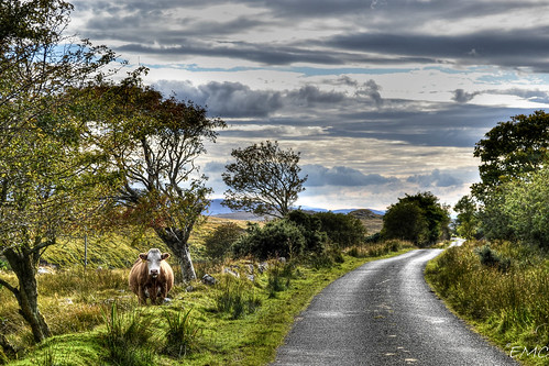 road trees ireland sky nature animal clouds landscape cow nikon scenery path scenic foliage countrylane hdr countryroad donegal irlande countrylife countyside irlandi d3100 nikond3100