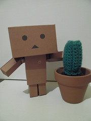 Os enseño al cactus de mi madre