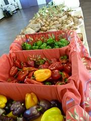 Full Cellar Farm's peppers