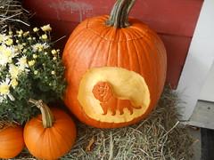LionCarvedPumpkin by Lyme Nursery