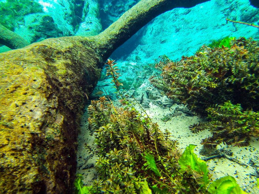Red Oak Island - Florida