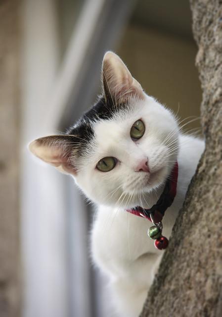 Cat in Dinan
