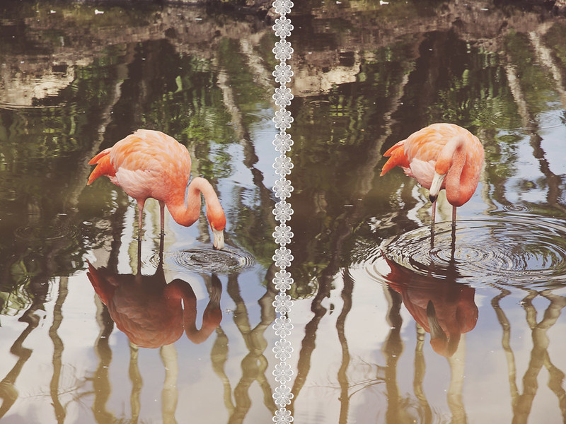 Flamingo Gardens 26