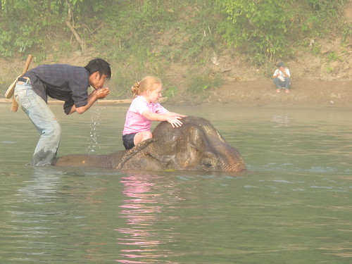Giving an elephant a bath, Laos