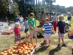 Pumpkin Patch 8