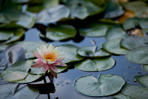Lily Pads by KarrieChantel