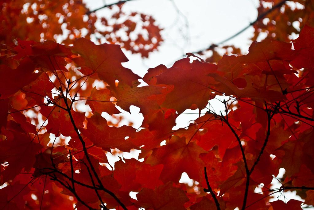 Autumn Cluster