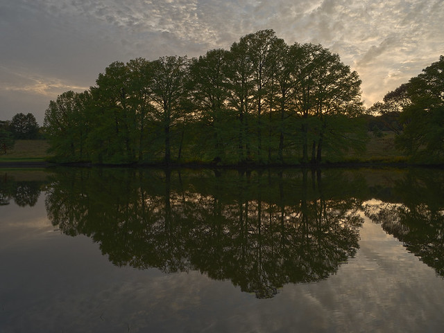 Shaw Nature Reserve (Arboretum), in Gray Summit, Missouri, USA - Trees reflected in Pinetum Lake