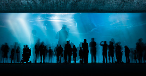 H2Glow (Deep Water Long Exposure), Monterey Bay Aquarium by flatworldsedge