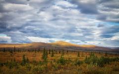 Tundra autumn
