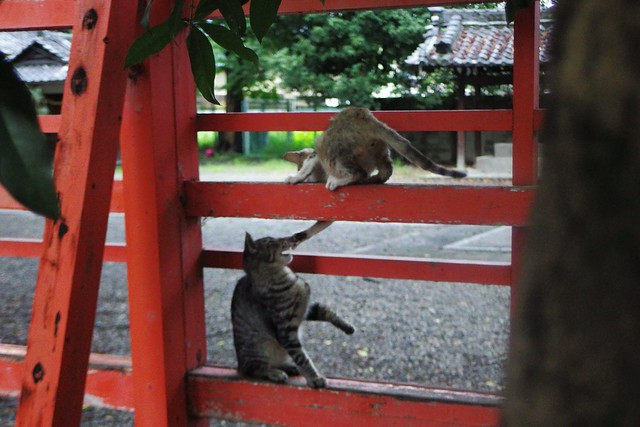 Today's Cat@2016-09-23