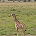 Etosha National Park impressions, Namibia - IMG_3099_CR2_v1