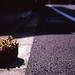 道端の鉢植え