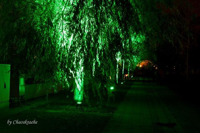 leuchtende Bäume 01
