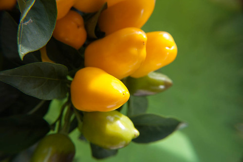 Bell peppers on the balcony by Brin d'Acier