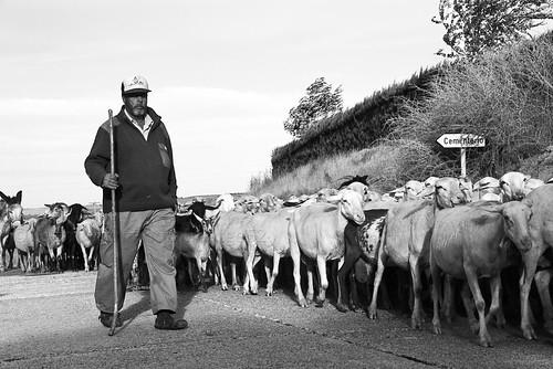 Pastor trashumante, un oficio en peligro de extinción. (Llum i Vida - PhotoImatge52). by JoanOtazu