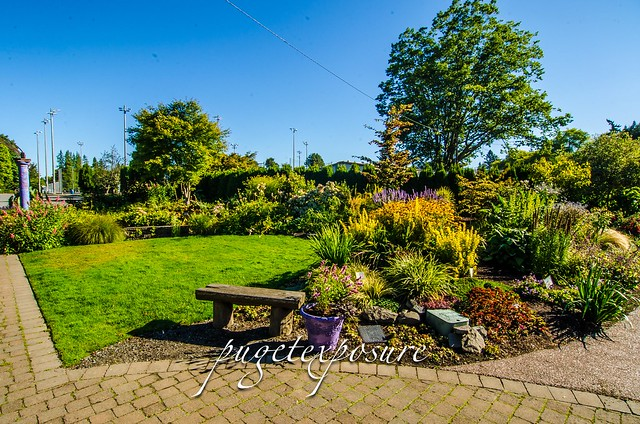No 104 Evergreen Arboretum Gardens Seattle Photography Location Seattle Spots And Reviews