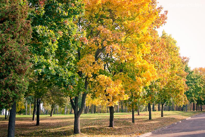 Осенняя фотосессия Андрюши