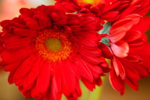 anniversaryflowers2-0912