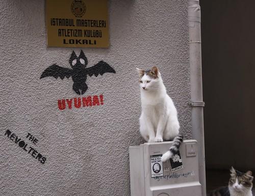 Katzen in Istanbul (1)