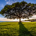 Big Tree on Foster Point by Mark Payton Photography