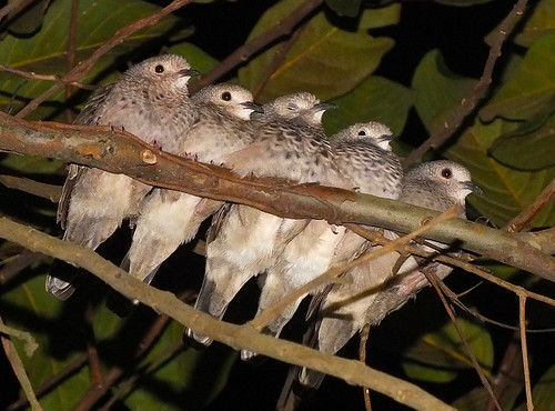 family of baby birds by Rui Pará over 70,000 views, thanks !!!