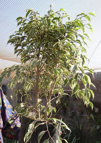 First bonsai help! 8028951082_88106b31e8