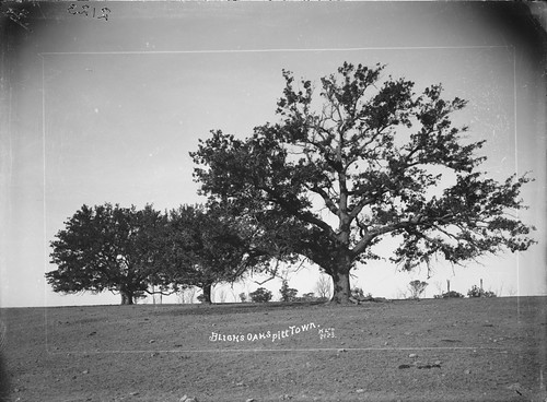 Bligh's Oaks, Pitt Town