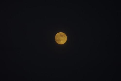 いい月が出てきました
