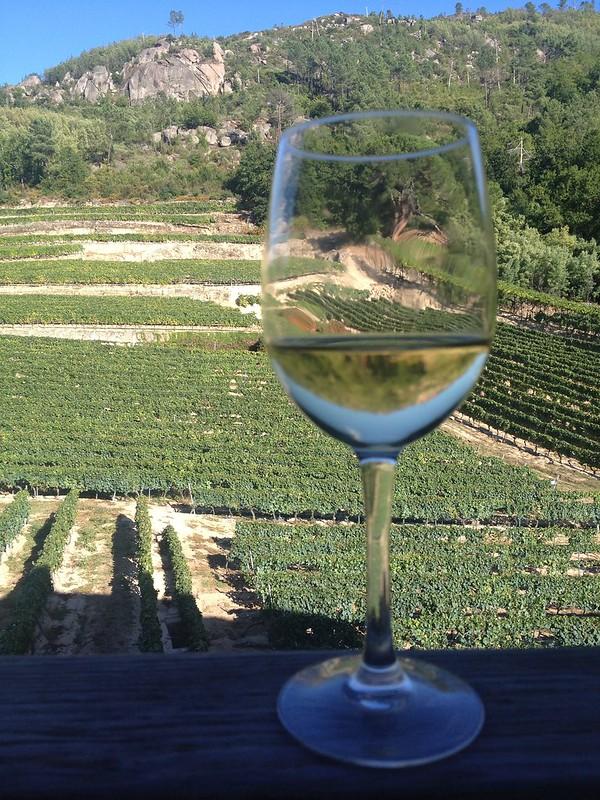 Viñedos y copa de vino