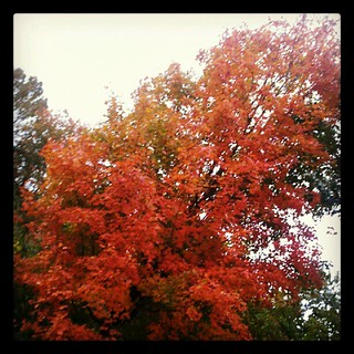 #newhampshire #fall #rainyday #foliage #leaves