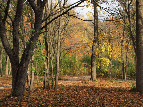 trees red orange color green fall yellow